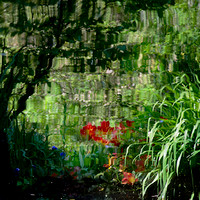 Giverny Reflection 2