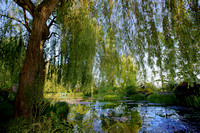Garden Pond with Willow